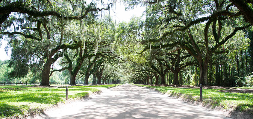 Avenue of Oaks at Boone Hall Plantation. © 2017 Audra L. Gibson. Image may not be used without permission. All Rights Reserved.