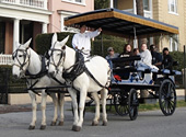 Mules pull a Charleston carriage tour along the streets of the historic district.