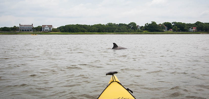 Search for dolphins during your group's kayak trip.