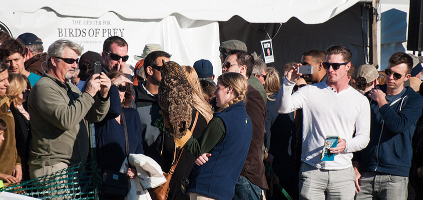 A crowd of onlookers learn about one of the owls cared for by the Birds of Prey Center. © 2015 Audra L. Gibson.
