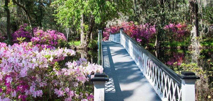 The White Bridge at Magnolia Plantation
